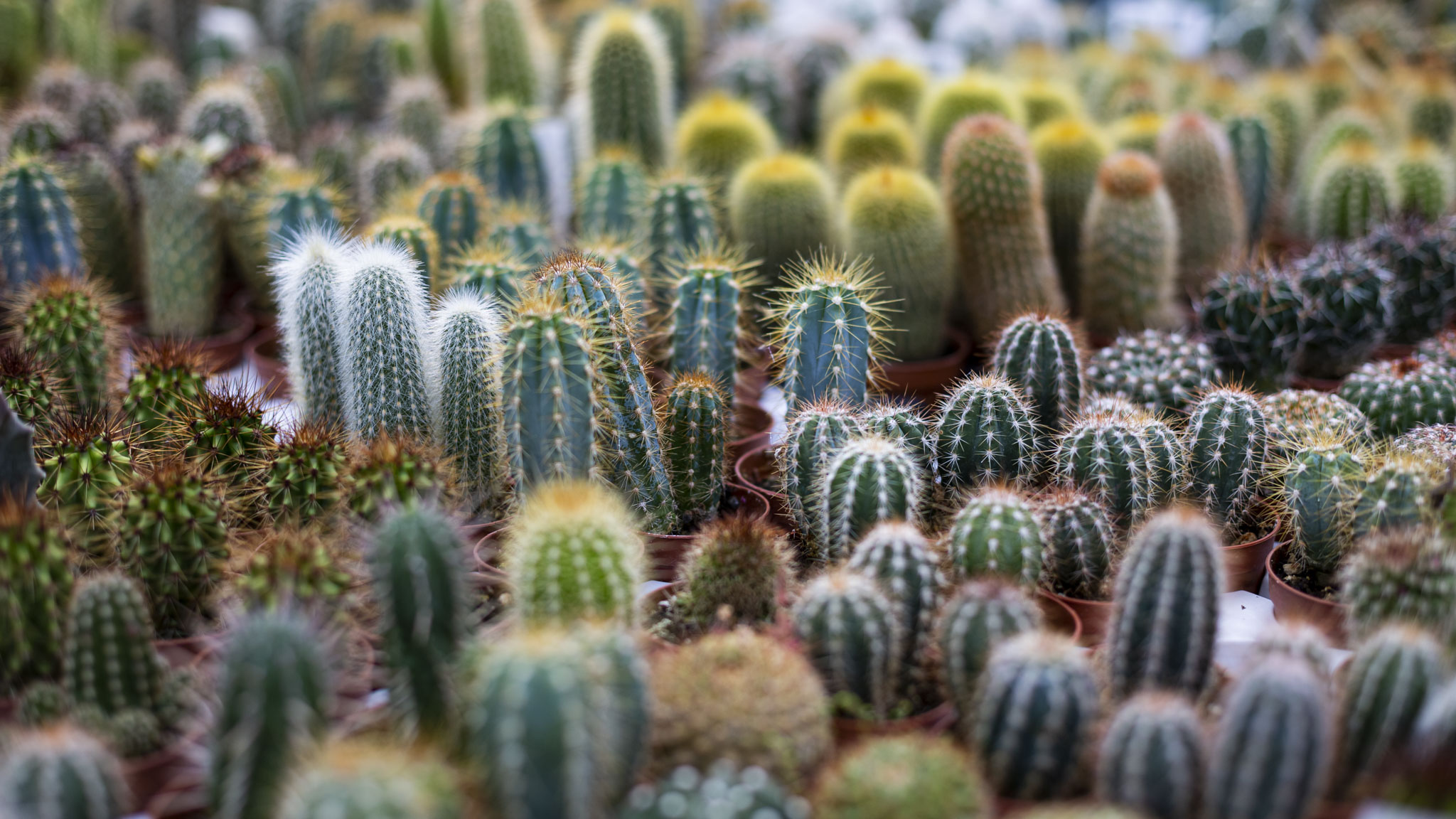Piante Grasse Da Esterno piante grasse - floridea